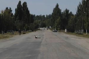 Gänse auf der Straße